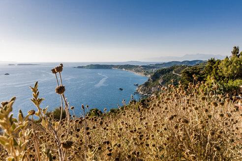 Greece, Corfu, Arillas, grasses at the coast - EGBF000042
