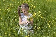 Little girl picking buttercups on a meadow - YFF000432