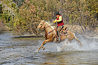 USA, Wyoming, Cowboy rides his horse across river - RUEF001600
