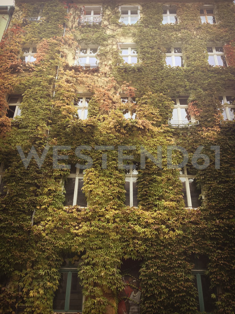 green building, with vine, Berlin, Germany - FBF000405