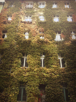 green building, with vine, Berlin, Germany - FBF000405
