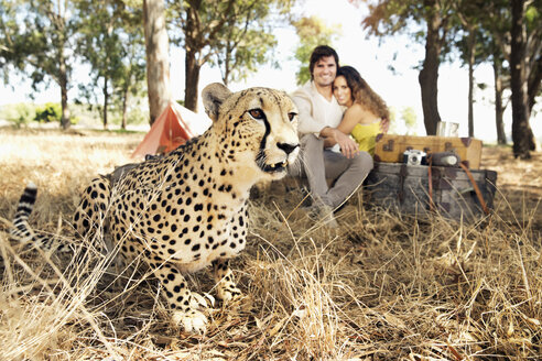 South Africa, cheetah on meadow with man and woman in background - TOYF000662