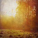 Forest and meadow at backlight - DWI000505