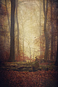 Autumn forest in the fog - DWI000512