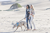 South Africa, Cape Town, two friends walking on the beach with dog - ZEF005230