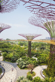 Republic of Singapore, Singapore, Supertrees at Gardens by the Bay - GW004051