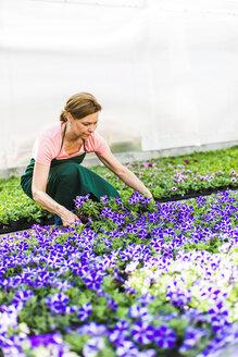 Woman in nursery working with flowers - UUF004343