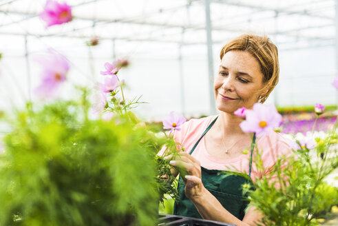 Woman in nursery looking at flower - UUF004354