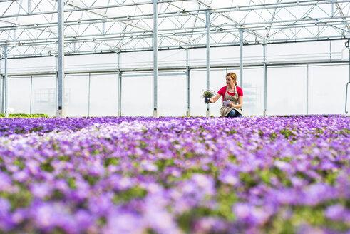 Woman in nursery looking at flower - UUF004486