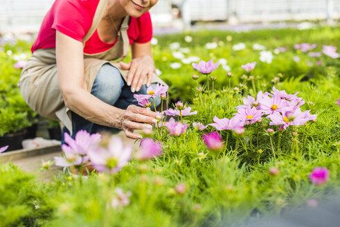Woman in nursery examining flower - UUF004365