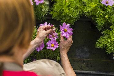 Woman in nursery examining flower - UUF004368