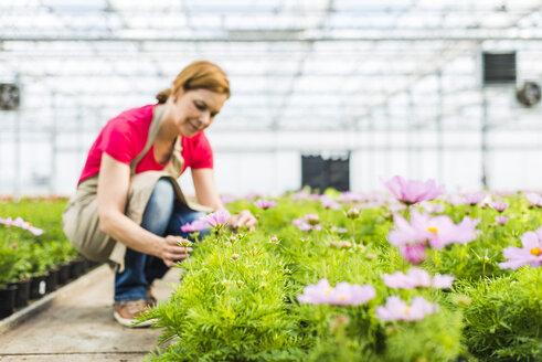 Woman in nursery examining flowers - UUF004370