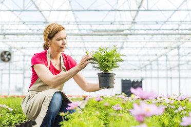 Woman in nursery examining flower - UUF004372