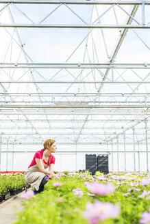 Woman in nursery looking at flowers - UUF004375