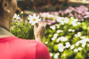 Woman in nursery examining flower - UUF004379