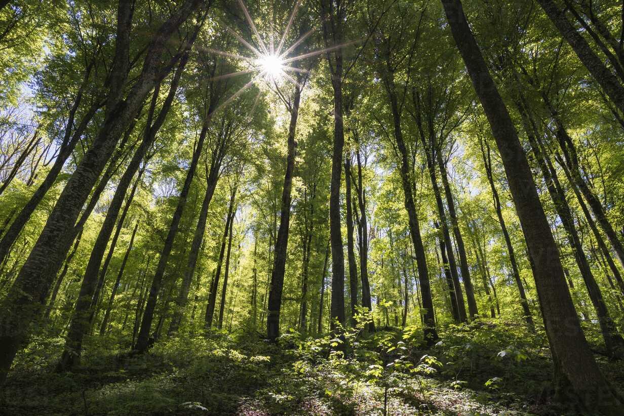 Germany, Baden-Wuerttemberg, beech forest - ELF001498 - Markus Keller/Westend61