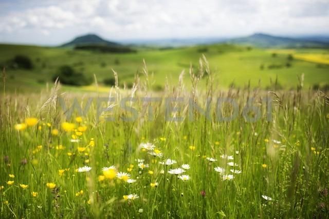 Germany, Constance district, landscape at springtime - ELF001503