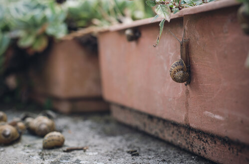 Snail on a flower box - RAEF000191