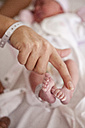 Woman's hand compared to newborn baby's feet - ZEF007048