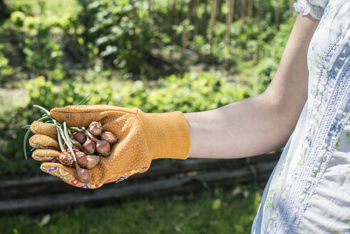 Woman's hand holding plant bulbs in a garden - DEGF000429