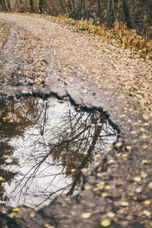 Reflection of trees in puddle on asphalt road - BZF000158