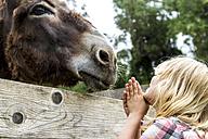 Greece, Corfu, girl watching donkey - JFEF000677