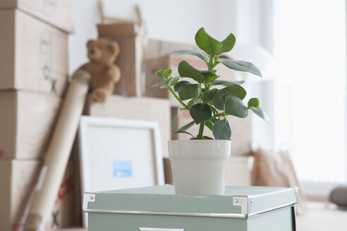 Piled cardboard boxes in flat, potted plant in foreground - RBF002817