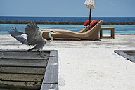 Maldives, crane on jetty at the ocean - STKF001277