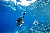 Maldives, fish and woman snorkeling in the Indian Ocean - STKF001295