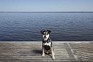 Portrait of dog sitting on jetty - MHCF000014