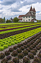 Germany, Baden-Wuerttemberg, Reichenau Island, lettuce cultivation at church St. Peter und Paul - KEB000204