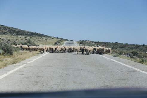 Greece, Crete, Flock of sheep on country road - STDF000179