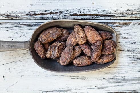 Meatl shovel of raw cocoa beans - SBDF002043