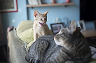 Two cats on the backrest of a couch - RAEF000214