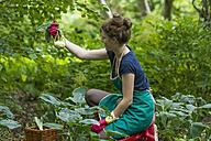 Young woman harvesting kohlrabi - SGF001714