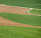 Germany, Black Forest, cultivation - KRPF001477