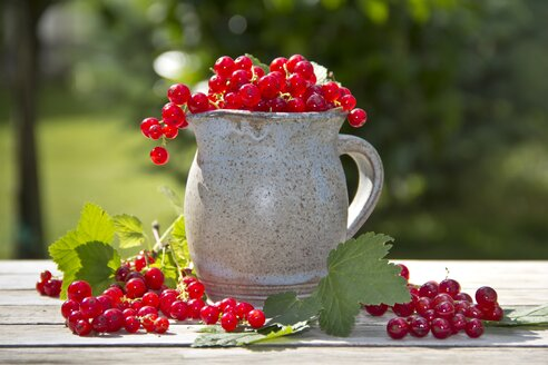 Jug of red currants - YFF000443