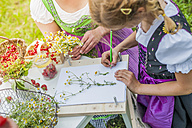 Germany, Saxony, girl wearing dirndl learning to draw plants - MJF001608