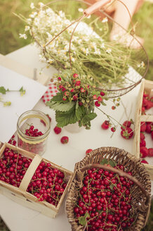 Chamomile flowers, woodland strawberries and red currants on a table - MJF001611