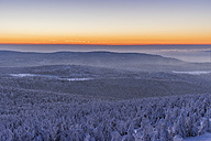 Germany, Saxony-Anhalt, Harz National Park, Coniferous forest at sunset - PVCF000437