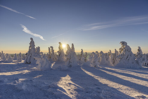 Germany, Saxony-Anhalt, Harz National Park, snow-capped firs on Brocken at sunrise - PVCF000444