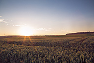 Germany, Baden-Wuerttemberg, wheat field against the evening sun - LVF003652