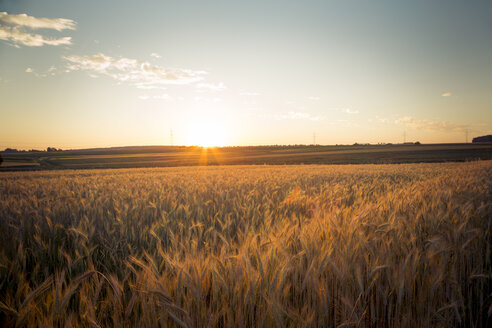 Germany, Baden-Wuerttemberg, barley field against the evening sun - LVF003647