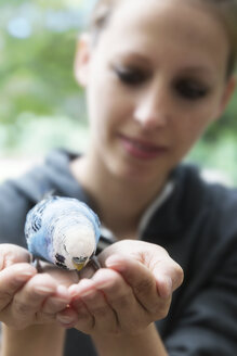 Light blue budgerigar on hands of a woman - MIDF000504