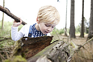Germany, little boy discovering nature - MFRF000231