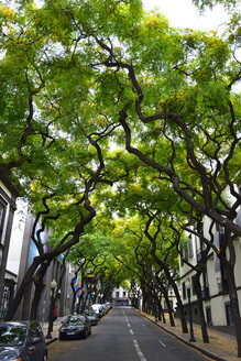Portugal, Madeira, Road and trees - FDF000099