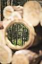 Mirror image of trees in the woods - ASC000220
