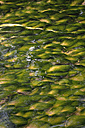 Aquatic plants in a stream - AX000756