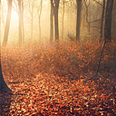 Broadleaf forest in autumn at sunset - DWIF000535