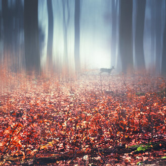 Foggy autumn forest, wet autumn leaves and deer, digitally manipulated - DWIF000543